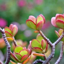 freetoedit nature naturephotography outdoorphotography garden