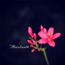 canon1200d flower folowme_in_instagram abdulmalk_alhinai