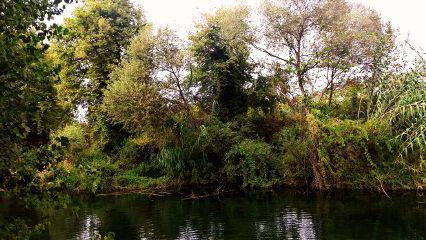 forest autumn river aqua water