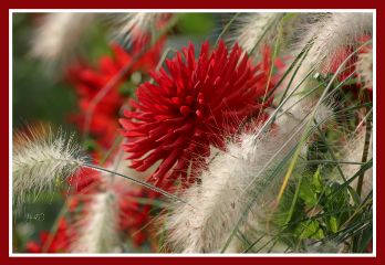 flower blossom colorful nature naturephotography
