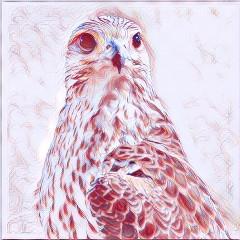 falcon72