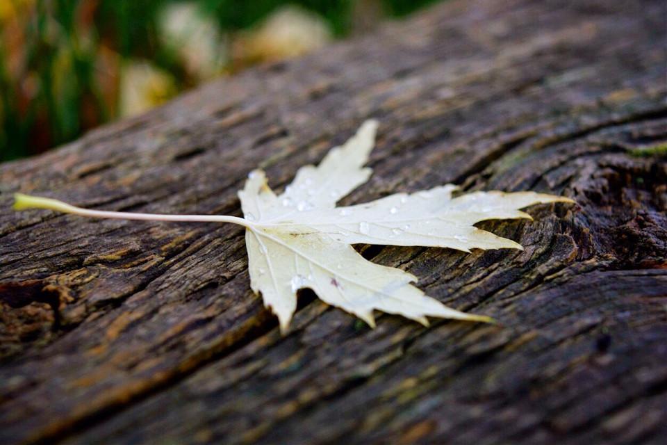 ~ #fall #photography #photographer #adventure #adventures #wanderlust #wanderluster #beautiful #friends #connection #connect #connecttonature #macro #leaf #vibrant