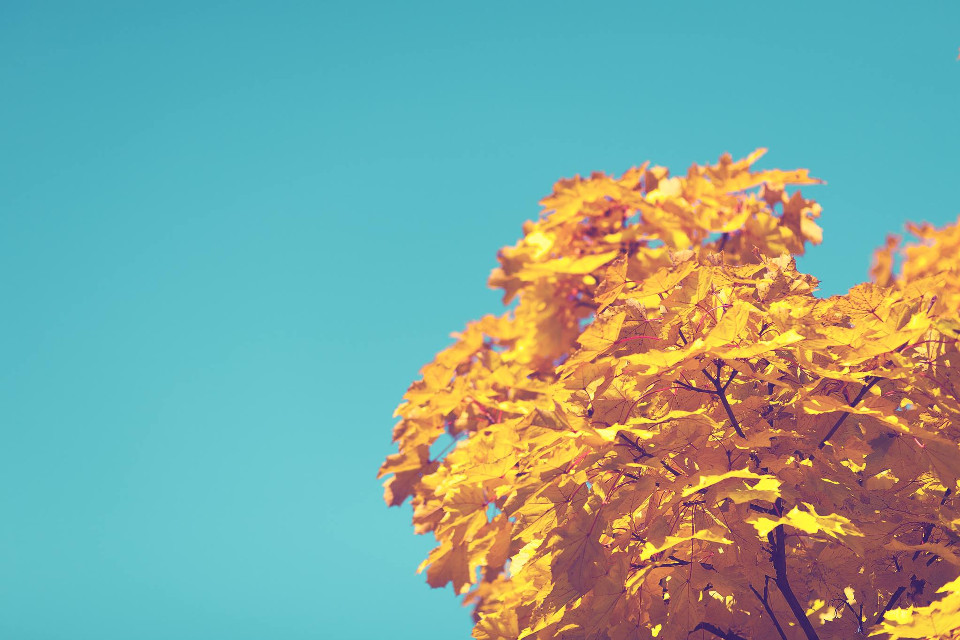 Let the magic begin. It's all around you just have to believe. Take this shot to a whole new level.  Unsplash (Public Domain) #FreeToEdit #art #interesting #nature #tree #yellow #blue #sky #leaves #magic #autumn