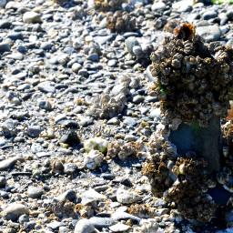 beachcombing seaglass beach beachfinds