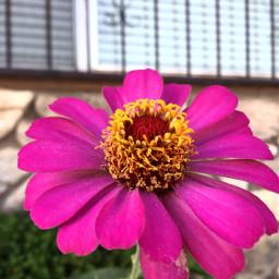 frommygarden flower love nature photography
