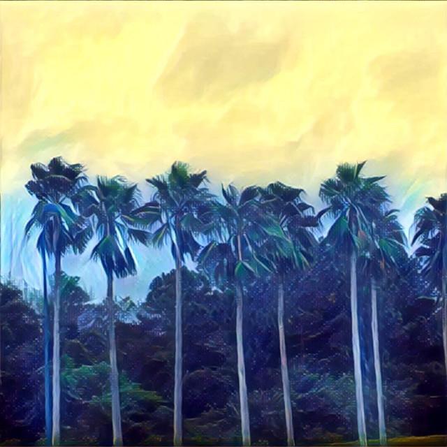 #FreeToEdit #palmtrees