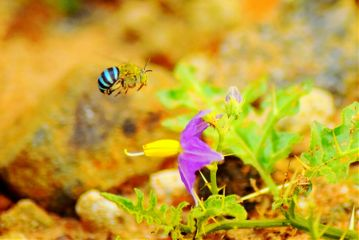 photography nature flower insect