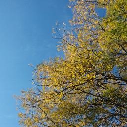 fall fallcolors sky bluesky fallshoot freetoedit