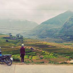 vietnam yenbai rice lanscapes