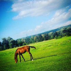 konik kon horse działkowo sundayfunday freetoedit