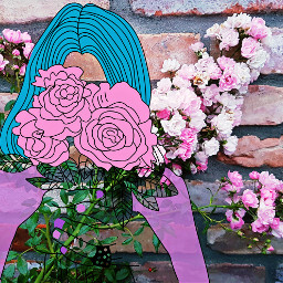 flowers roses rosespink rosesflower wall
