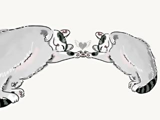 freetoedit love cats cat minimalism