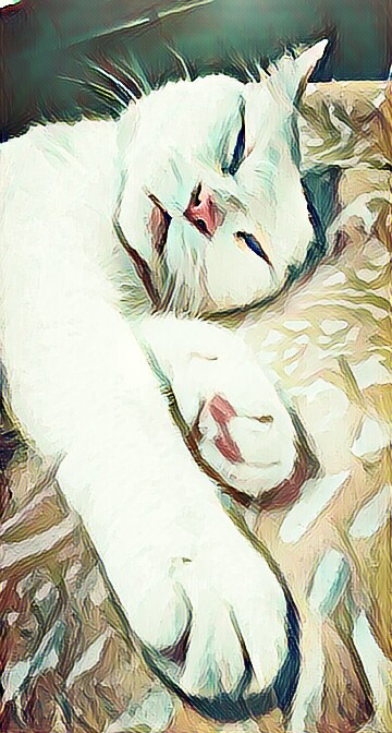 #cats  #catsofpicsart  #catsphotography  #catstagram  #catslover  #catslife  #cute cats #neat #drawingfilter