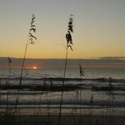 beach nature naturephotography dunegrass sunrise