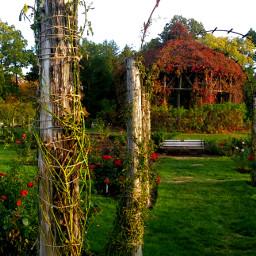elizabethpark autumn garden