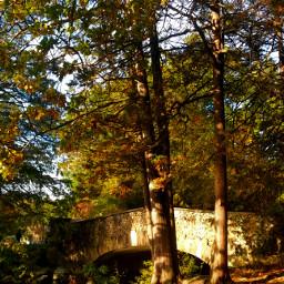elizabethpark autumn