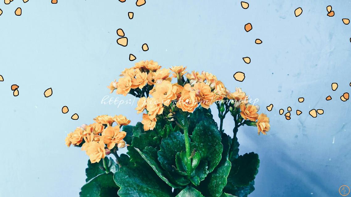 """Rising..."" Thanks to Friska Rizky ( @fizkyr ) for the cute pic! :)  #flowers  #flower  #orange  #blue  #drawon  #emotions  #edit  #editing  #rising"