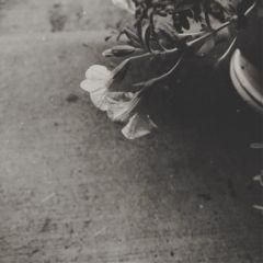 art summer texture blackandwhite blossom