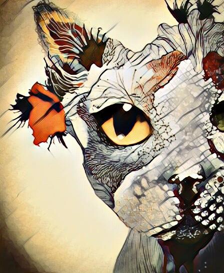 #FreeToEdit  #remixed  #cat #magiceffect