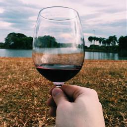wine winelovers redwine vino freetoedit