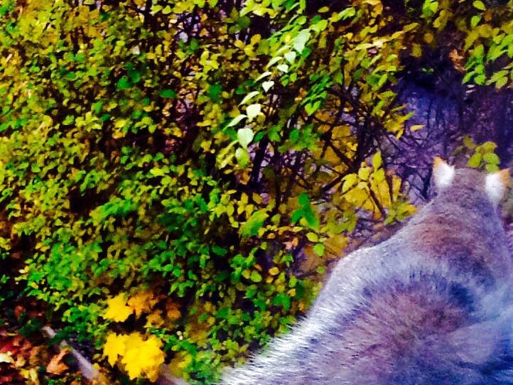#squirrel #animal #FreeToEdit