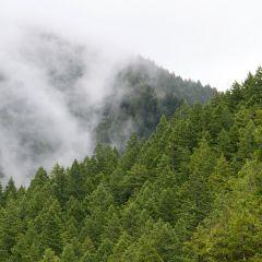 freetoedit fog nature foggy view