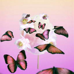freetoedit candyfloss sweet butterfly flowers